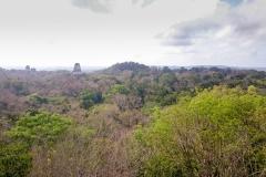 Tikal-7