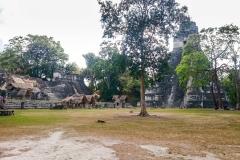 Tikal-9