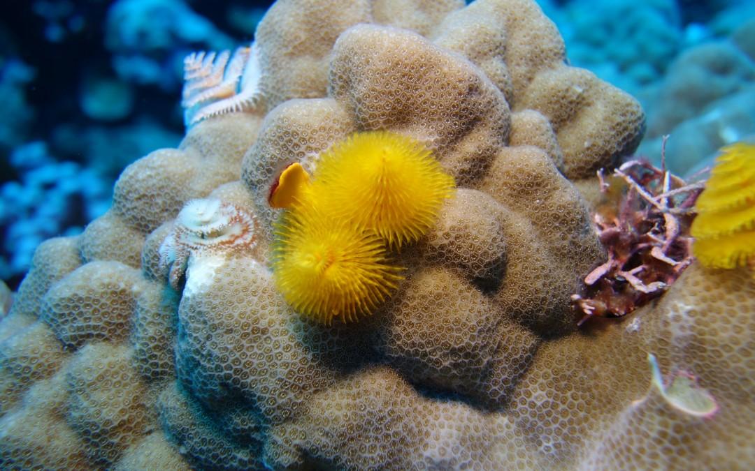 Diver, Diver, Diver :-)